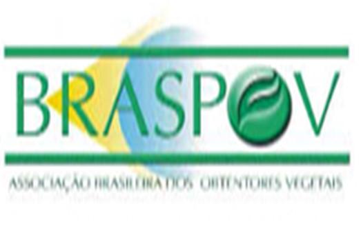 BRASPOV 1
