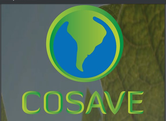 RESUMO EXECUTIVO COSAVE – FEVEREIRO 2019